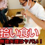 子犬が口にくわえた物を回収する方法