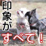 子犬のトリミングトラウマ解消法