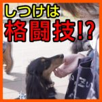 子犬のしつけという名の格闘技!?