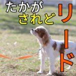 子犬にリードをつけるのが一瞬で簡単になる方法