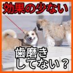 子犬が歯周病になる歯磨きをする人の方法