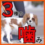 3つの「子犬噛み」攻略法