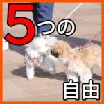 子犬のQOLを上げる5つの自由とは?