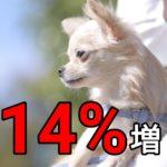14%増の犬を迎えた家族がすることは?