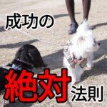 子犬のしつけ【〇〇×〇〇の法則】