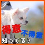 まず子犬の〇〇知ってる?