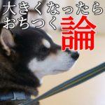 子犬は¨自然¨とおちつく??
