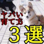 子犬のマズい育て方3選
