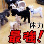 子犬は小さくて、か弱い・・・??