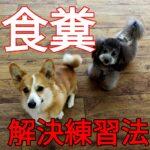 子犬の食糞カンタン対処法