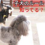 子犬が誤食しないための応急処置法