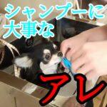 子犬を自宅で洗うとは¨ココ¨にも気をつける