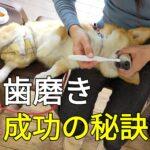子犬の歯磨きに大事な〇〇作り