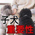 子犬の保護から思うしつけの重要性
