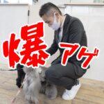 子犬の成長を爆アゲする○○思考