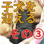 子犬を迎える時にチェックする3つのポイント~その3~