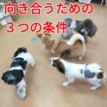 飼い主さんと子犬に向き合う3つの条件