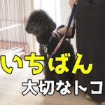 子犬をしつけるのに一番大切なトコ