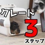 子犬にクレートを教える3ステップ