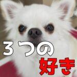 子犬がトリミングを100%好きになる『3つの好き』とは?