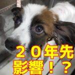 子犬が20年後も可愛くいる為のトリミング?