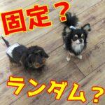 【実は大変⁉】子犬にごはんをあげる時間決めてない?