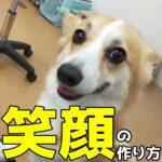 子犬のしつけを成功したい方必見!「〇〇を制する者は子犬を制する」