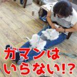 誰もがやってしまう子犬のしつけを失敗させる『ガマン』とは?