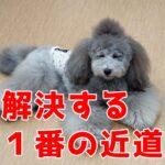 子犬のしつけを成功させるのに重要な「〇〇」と「〇〇」