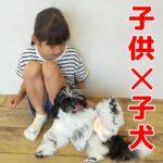 子犬が子供を怖がらない為に「3つの大きな〇〇」