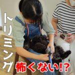 ガタガタ怖がる子犬のトリミングは絶対に変えられる!