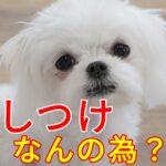 何のために『子犬のしつけをするの?』にどう答える?
