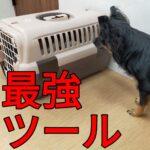台風で思い出す「子犬の最強ツール」クレートの重要性とは?