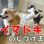 子犬のしつけを苦行にしない『イマドキ』のしつけ方法とは?