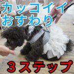 子犬に「カッコイイおすわり」を教える3つのステップ