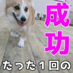 「たった1回の成功体験」から始まる子犬のトイレトレーニング